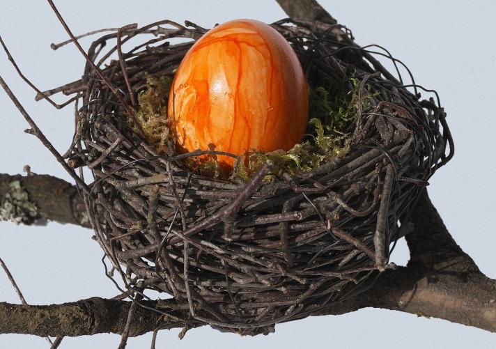 birds-nest-3279596_1280