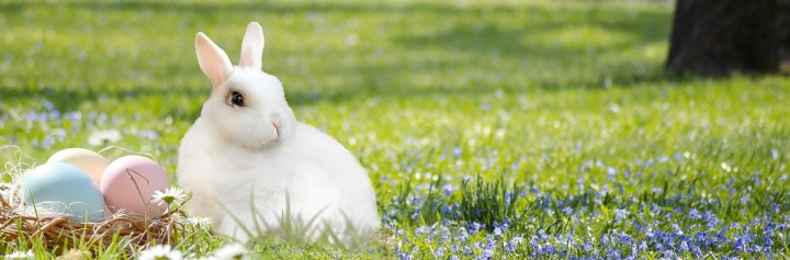 easter-bunny-3201433_1280